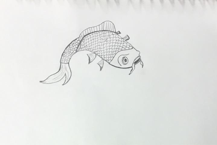 Koi+fish+by+Anthony+Ciaccio