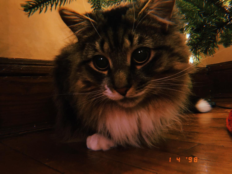 my cat jinx
