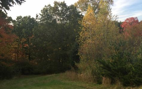 Walpole forest