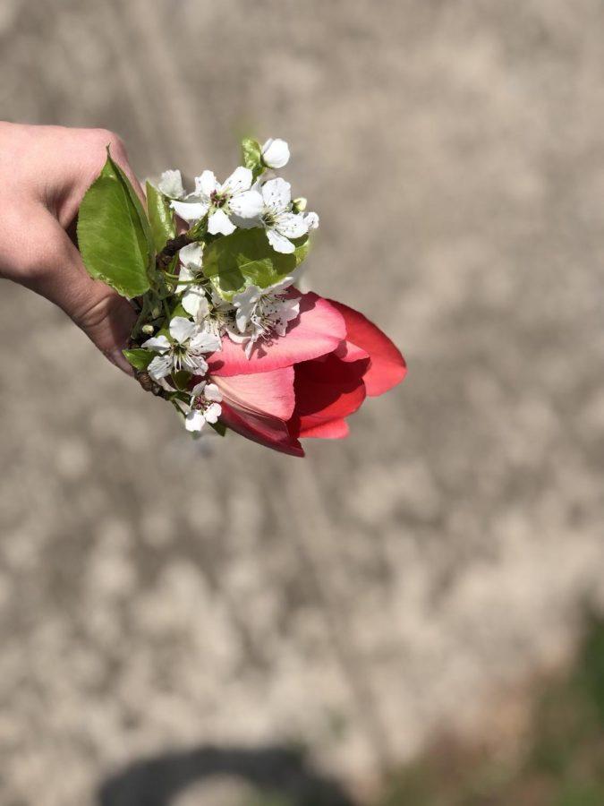 Falling+Rose