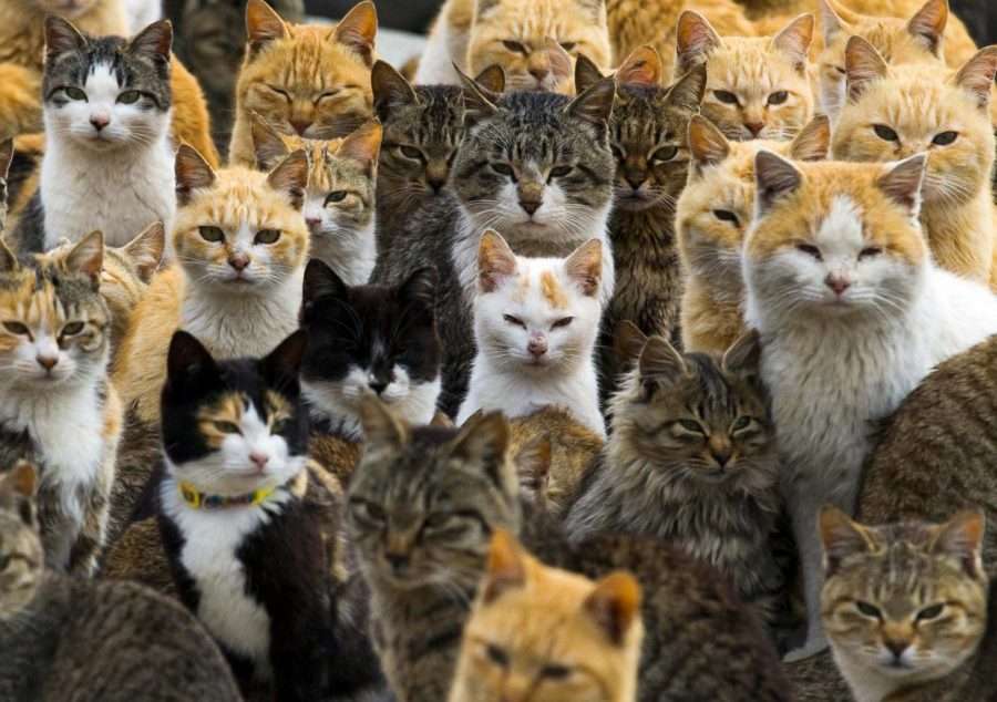 Photo via  https://news.yahoo.com/photos/hello-kitty-and-kitty-and-lots-more-kitties-on-japanese-island-where-cats-rule-1425448083-slideshow/ under the Creative Commons License