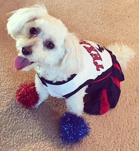 January 12th: It's National Dress Your Pet Up Day!