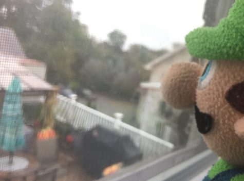 NOT OKAY: Thoughts of guilt overcome Luigi after believing he was the cause of his brother's disappearance.