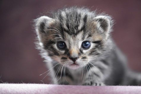 Photo via https://pixabay.com/photos/cat-baby-baby-cat-kitten-cat-cute-4201051/ under the Creative Commons License