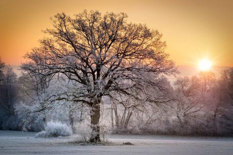Photo via https://pixabay.com/photos/sun-winter-wintry-nature-snow-sky-5167608/ under the Creative Commons license.
